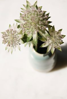 Bud vases and Astrantia, perfect way to add flowers to a small room #flowers #astrantia #budvase #turquoise