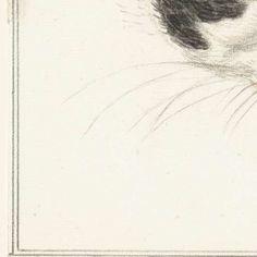 Kop van een lapjeskat, van voren, met gesloten ogen, Jean Bernard, 1819 - Rijksmuseum