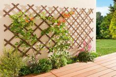 Un treillis pour un joli mur végétal : Balcons et terrasses : des idées déco pour en profiter avec style - Linternaute