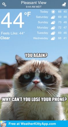 FREE @ WeatherKittyApp.com