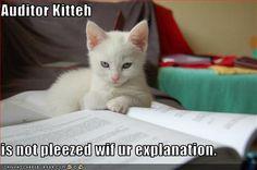 Auditor Kitteh