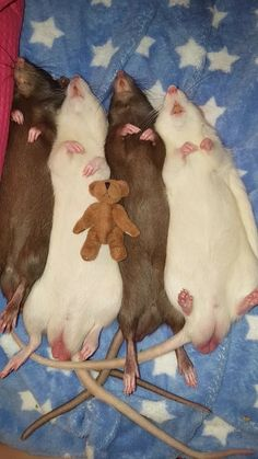 I can almost hear little snores from this extremely cute group!