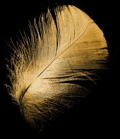 #bouchara #gold Plume Or