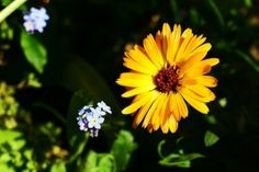 Search results for: 'journal plant obsession calendula' Calendula, Fine Art Photo, Photo Art, Pop Custom, Home Garden Plants, Annual Flowers, Amazing Flowers, Macro Photography, Amazing Gardens