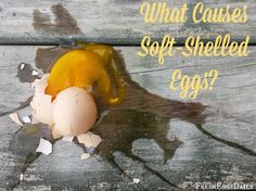 "Soft Shelled or ""Rubber"" Eggs - Causes and Prevention"