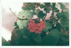 analog red flower