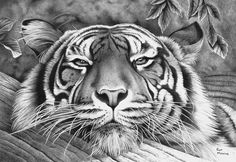 Relaxed in Ballpoint Pen by ronmonroe on DeviantArt Tiger drawing