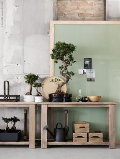 Learning about Bonsai trees in Thornton, Illinois Ikea Inspiration, Interior Inspiration, Living Room Colors, Living Room Designs, Ficus Microcarpa Ginseng, Ikea Plants, Ikea Storage, Rustic Design, Beautiful Interiors