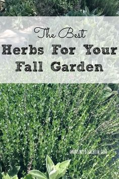 The Best Herbs For Your Fall Garden   Moms Need to Know