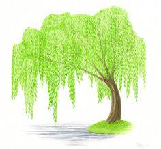 Original Painting Tree Watercolor Weeping by ABFoleyArtworks, $40.00