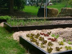 Vegetable Gardening 101: Soil, composting, types of beds, etc. Very informative post!