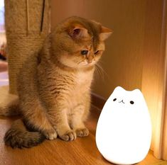The kitty and lamp is sooooo cute together! - your daily dose of funny cats - cute kittens - pet memes - pets in clothes - kitty breeds - sweet animal pictures - perfect photos for cat moms Cute Baby Cats, Cute Little Animals, Cute Cats And Kittens, Cute Funny Animals, Cool Cats, Kittens Cutest, Funny Cats, Ragdoll Kittens, Tabby Cats