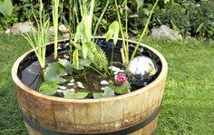 Ein Teich im Topf: Kompakte Miniversion - Gartengestaltung - DAS HAUS