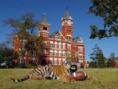 Image detail for - Auburn-University-Campus-General-Campus-Tiger-And-Samford-AU-CP-GC ...