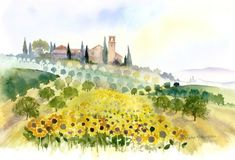 Sunflowers and Olive Groves, Tuscany by Rachel McNaughton @ Mini Gallery - Watercolour Painting Watercolor Effects, Watercolor Landscape, Landscape Paintings, Watercolor Art, Landscapes, Watercolour Paintings, Art Paintings, Watercolor Flowers Tutorial, Watercolor Techniques