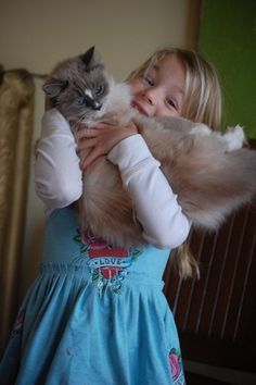 Ragdolls are kid friendly - you have to be careful with toddlers & younger kids so they don't hurt the cat (usually you have to be sure the cat doesn't hurt the toddler!)