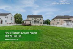 Take-all root rot is a fungal disease that can affect the overall health and beauty of your lawn. Read more to learn its causes, symptoms, and treatment so you can keep your grass looking vibrant and fresh. How To Protect Yourself, Irrigation, Gardening Tips, Health And Beauty, Lawn, Grass, Vibrant, Mansions, Lighting