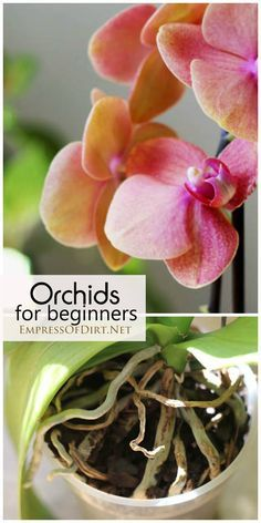 Orchids for beginners: an experienced grower tells how she cares for her orchids and what you need to know to get started at home.
