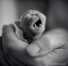 new #kitten