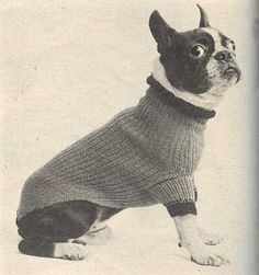 Sweater for Boston from McCall's Needlework, Fall-Winter 1952-53   Alert Boston Terrier, a well-dressed dog on chilly days.   Alert?  This d...