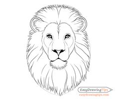 How to Draw Lion Face & Head Step by Step – EasyDrawingTips – Art Center Lion Head Drawing, Lion Drawing Simple, Animal Sketches, Animal Drawings, Drawing Sketches, Drawing Drawing, Face Proportions Drawing, Dog Lion Mane, Lion Eyes