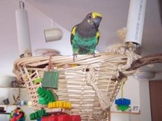 Parrot play stands, perches and swings make out of cage time fun and are a way to provide physical and mental stimulation for your bird.