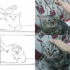 pencil drawings - How to pet a cat Nailed it Cute Funny Animals, Funny Cute, Cute Cats, Funny Pics, Funny Pictures, Cat Nails, Cat Drawing, Animal Memes, Cat Memes