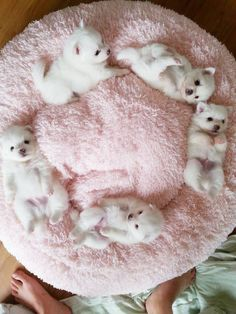 Circle of Puppies!!!
