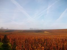 Переходила традиционный октябрьский маршрут как следует; на этот раз из Ножана перешла сразуна правый берег Марны - в сплошном тумане - и поднялась из на виноградные холмы. Очень прикольно: как только набрала немного высоты, туман оказался внизу, налитый в долину, как молочный кисель, скрывая…