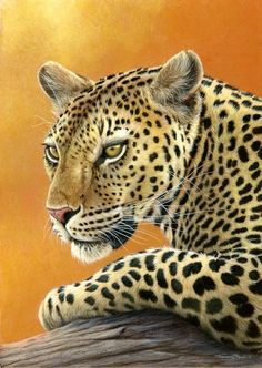 evening sunshine leopard by Jeremy Paul