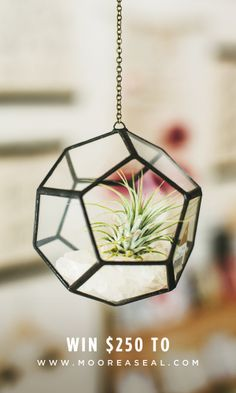 A beautiful handmade terrarium by Meg Myers hanging in the Moorea Seal store, in Seattle, WA. Air Plant Terrarium, Glass Terrarium, Hanging Terrarium, Hanging Plant, Exotic Plants, My Dream Home, Home And Living, House Plants, Flower Power