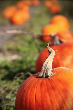 Off to the pumpkin patch!