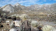 Parque Nacional Sierra Nevada | 28 Lugares que comprueban que Venezuela es la más bella del universo