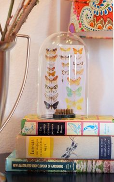 Butterfly cloche and vintage books thrifted at a local Savers store by Vintage Plates, Vintage Books, The Bell Jar, Bell Jars, Bookcase Redo, Cloche Decor, Insect Wings, Jar Art, Butterfly Frame