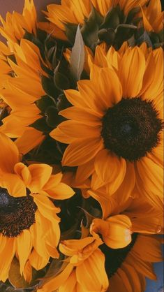 Sunflowers And Roses, Sunflowers Background, Flower Background Wallpaper, Flower Phone Wallpaper, Scenery Wallpaper, Cute Wallpaper Backgrounds, Flower Backgrounds, Pretty Wallpapers, Yellow Flowers