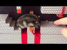 Hamster Super Mario Bros.: World 1-4