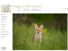 Images of Wild Nature by Andrew Parkinson