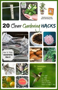 20 Clever Gardening Hacks to Save Time and Money