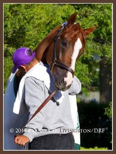 America loves California Chrome - even after a bad day at the Belmont! Here, California Chrome and his buddy Willie. All The Pretty Horses, Beautiful Horses, Animals Beautiful, American Pharoah, Thoroughbred Horse, Warmblood Horses, Sport Of Kings, Racehorse, Horse Farms