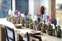 Lovely hyacinths in different colours -  down the middle of a table - great idea!