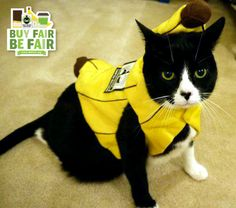To celebrate National Cat Day, leave us the purrfect caption for this photo of our #FairTrade loving furry friend! #BeFair via http://BeFair.org/