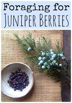 Herbal Medicine Juniper Berries are edible and medicinal, learn about foraging them! - Foraging for Juniper Berries. More than just gin. but please, don't forget about the gin! Healing Herbs, Medicinal Plants, Herbal Plants, Edible Wild Plants, Herbs For Health, Juniper Berry, Juniper Plant, Wild Edibles, Survival Food