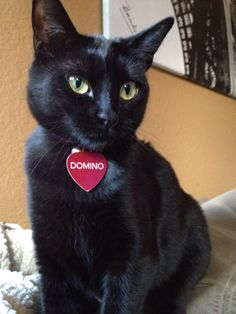 Beautiful Domino, my black cat