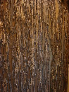 bark faux finish - Clinton Millsap
