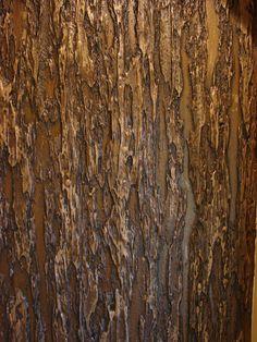 bark faux finish - Clinton Millsap