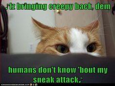 http://icanhascheezburger.com/2012/03/08/funny-cat-pictures-lolcats-iz-bringing-creepy-back/
