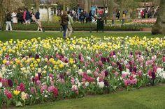 Beautiful Spring Garden Park Keukenhof, Dutch Garden World, Flower Bulbs
