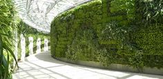 How do Green Walls work? How do you keep them watered and hydrated? We have solutions.