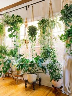 Kitchen window Fiddle leaf figs, pothos, snake plant or succulent: Whatever your green thumb prefers, there's no question that a houseplant adds a lively touch to interior style. Check out these ideas for working houseplants into your own home decor. Decor, Garden Room, Hanging Plants, House Plants Indoor, Natural Home Decor, Plant Decor, Plant Life, House Plants Decor, Room With Plants