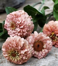 What You Can Do To Improve Your Landscaping using Garden Arbor Everyone that owns a home wants to take pride in it. Cut Flower Garden, Pink Garden, Garden Pots, Blush Flowers, Cut Flowers, Beautiful Gardens, Beautiful Flowers, Professional Landscaping, Seed Catalogs